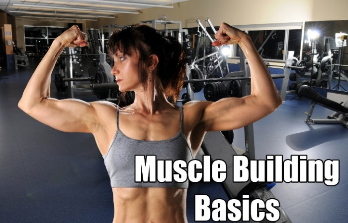 muscle building basics