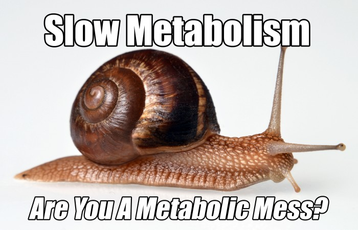 slow metabolism are you a metabolic mess