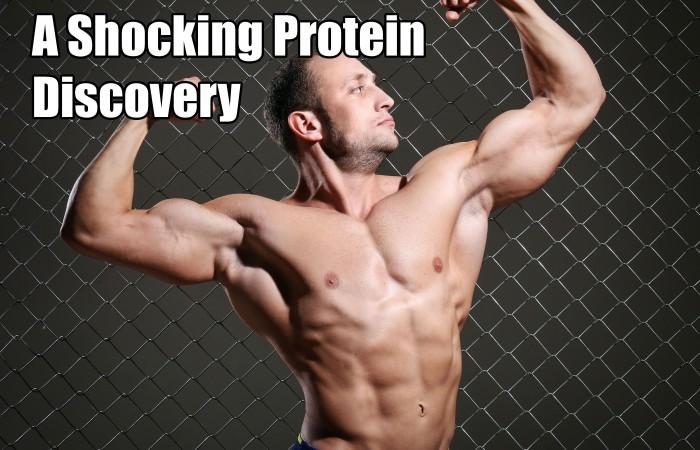 protien supplement